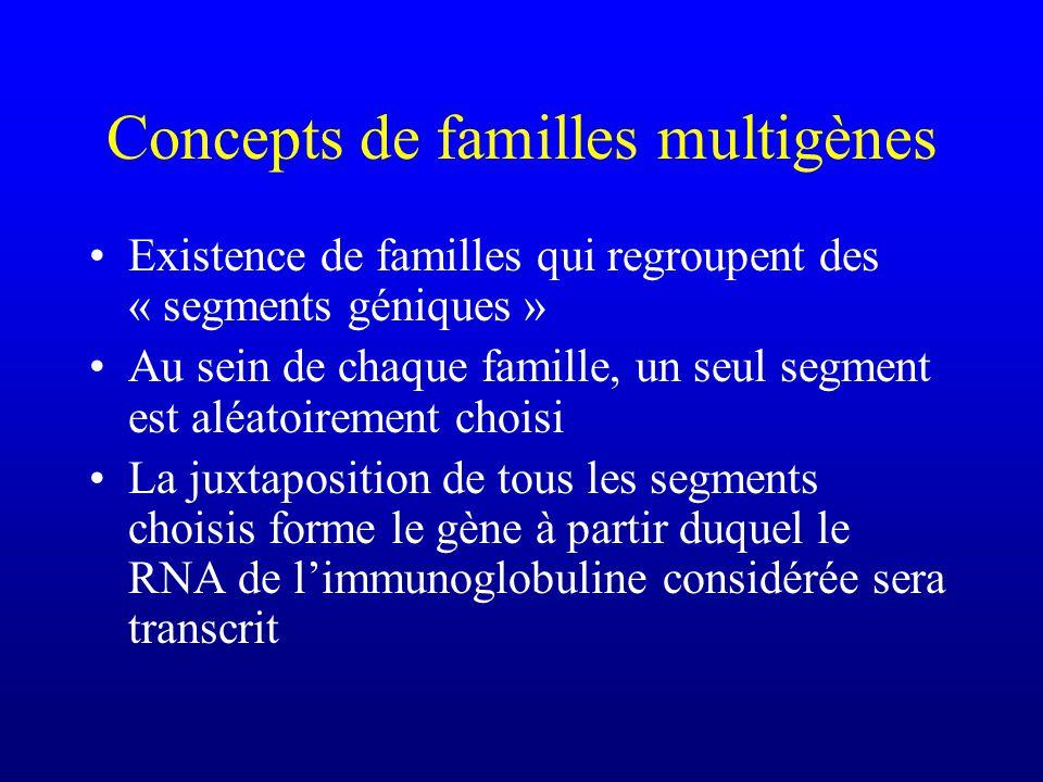 Concepts de familles multigènes Existence de familles qui regroupent des « segments géniques » Au sein de chaque famille, un seul segment est aléatoirement choisi La juxtaposition de tous les segments choisis forme le gène à partir duquel le RNA de limmunoglobuline considérée sera transcrit