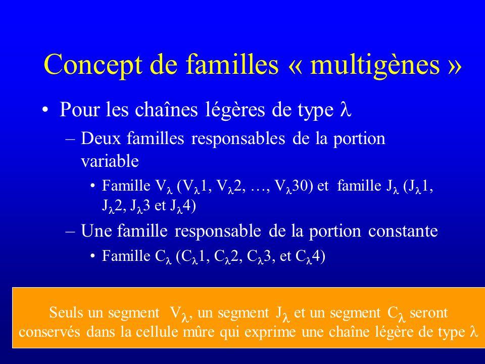 Concept de familles « multigènes » Pour les chaînes légères de type –Deux familles responsables de la portion variable Famille V (V 1, V 2, …, V 30) et famille J (J 1, J 2, J 3 et J 4) –Une famille responsable de la portion constante Famille C (C 1, C 2, C 3, et C 4) Seuls un segment V, un segment J et un segment C seront conservés dans la cellule mûre qui exprime une chaîne légère de type