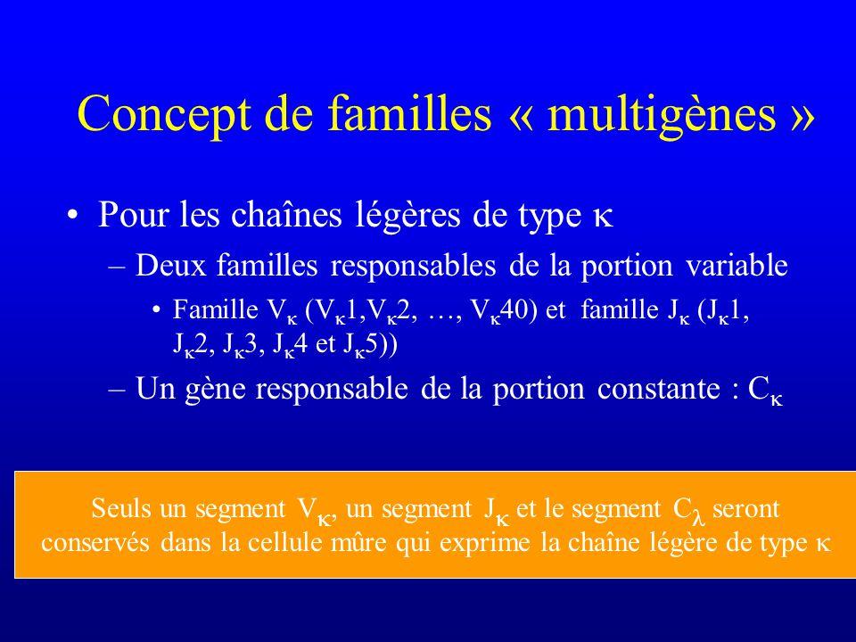 Concept de familles « multigènes » Pour les chaînes légères de type –Deux familles responsables de la portion variable Famille V (V 1,V 2, …, V 40) et famille J (J 1, J 2, J 3, J 4 et J 5)) –Un gène responsable de la portion constante : C Seuls un segment V, un segment J et le segment C seront conservés dans la cellule mûre qui exprime la chaîne légère de type