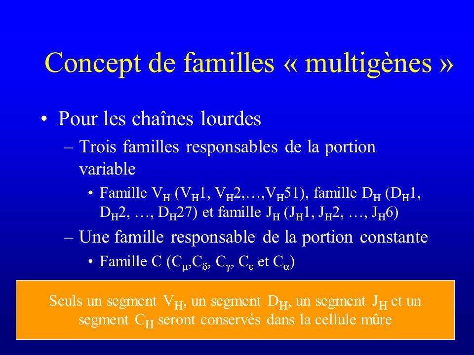 Concept de familles « multigènes » Pour les chaînes lourdes –Trois familles responsables de la portion variable Famille V H (V H 1, V H 2,…,V H 51), famille D H (D H 1, D H 2, …, D H 27) et famille J H (J H 1, J H 2, …, J H 6) –Une famille responsable de la portion constante Famille C (C,C, C, C et C ) Seuls un segment V H, un segment D H, un segment J H et un segment C H seront conservés dans la cellule mûre