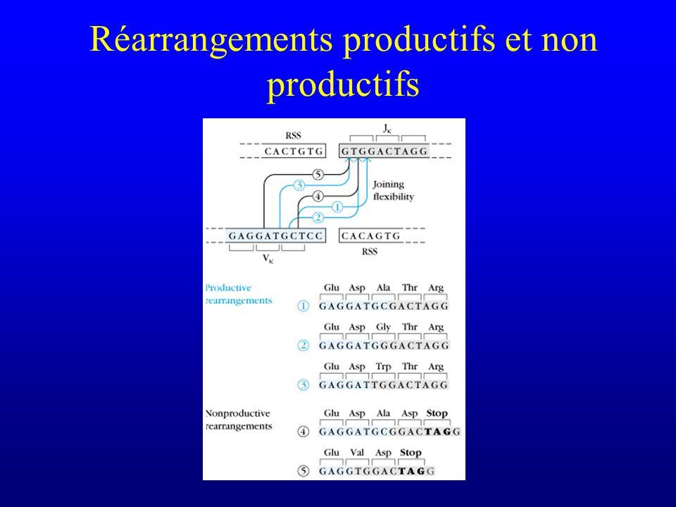 Réarrangements productifs et non productifs