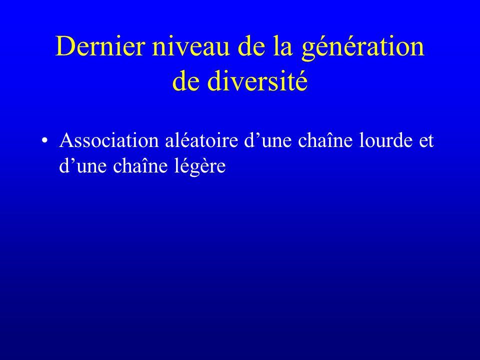 Dernier niveau de la génération de diversité Association aléatoire dune chaîne lourde et dune chaîne légère