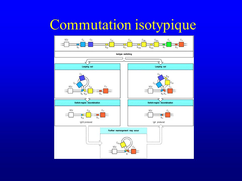 Commutation isotypique