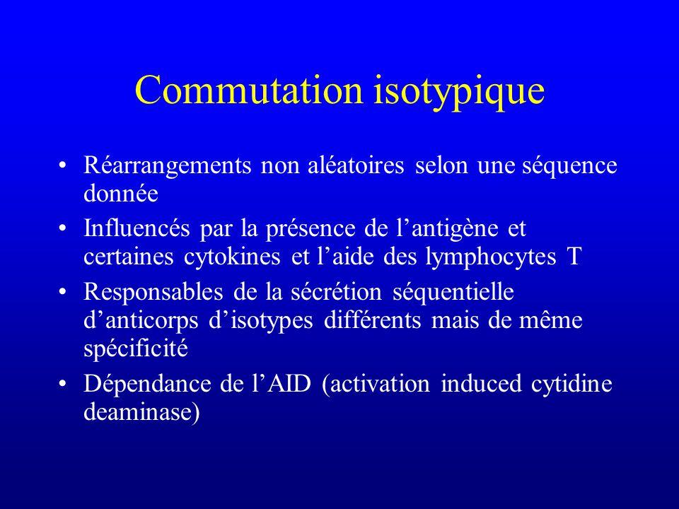 Réarrangements non aléatoires selon une séquence donnée Influencés par la présence de lantigène et certaines cytokines et laide des lymphocytes T Responsables de la sécrétion séquentielle danticorps disotypes différents mais de même spécificité Dépendance de lAID (activation induced cytidine deaminase)