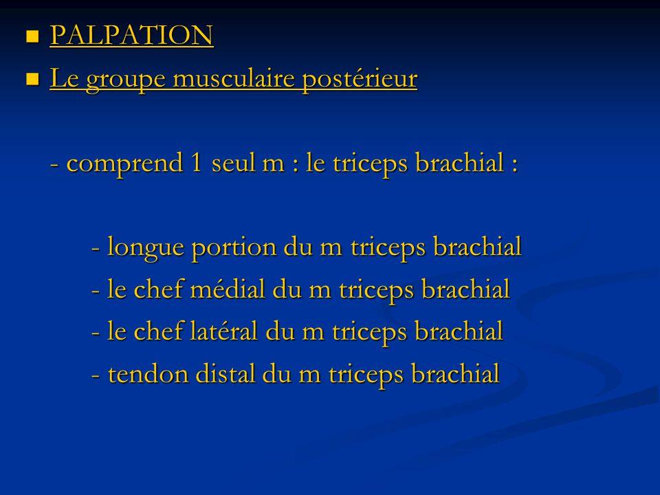 PALPATION PALPATION Le groupe musculaire postérieur Le groupe musculaire postérieur - comprend 1 seul m : le triceps brachial : - longue portion du m triceps brachial - le chef médial du m triceps brachial - le chef latéral du m triceps brachial - tendon distal du m triceps brachial