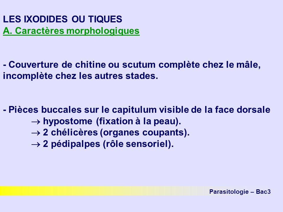 Parasitologie – Bac3 LES IXODIDES OU TIQUES A. Caractères morphologiques - Couverture de chitine ou scutum complète chez le mâle, incomplète chez les