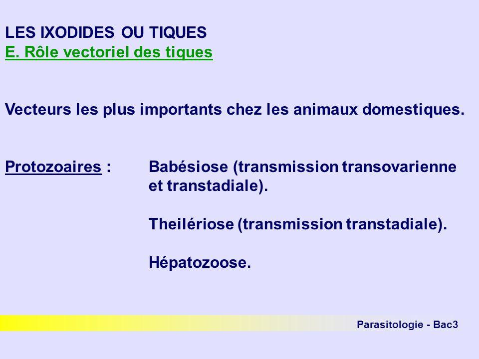 LES IXODIDES OU TIQUES E. Rôle vectoriel des tiques Vecteurs les plus importants chez les animaux domestiques. Protozoaires : Babésiose (transmission
