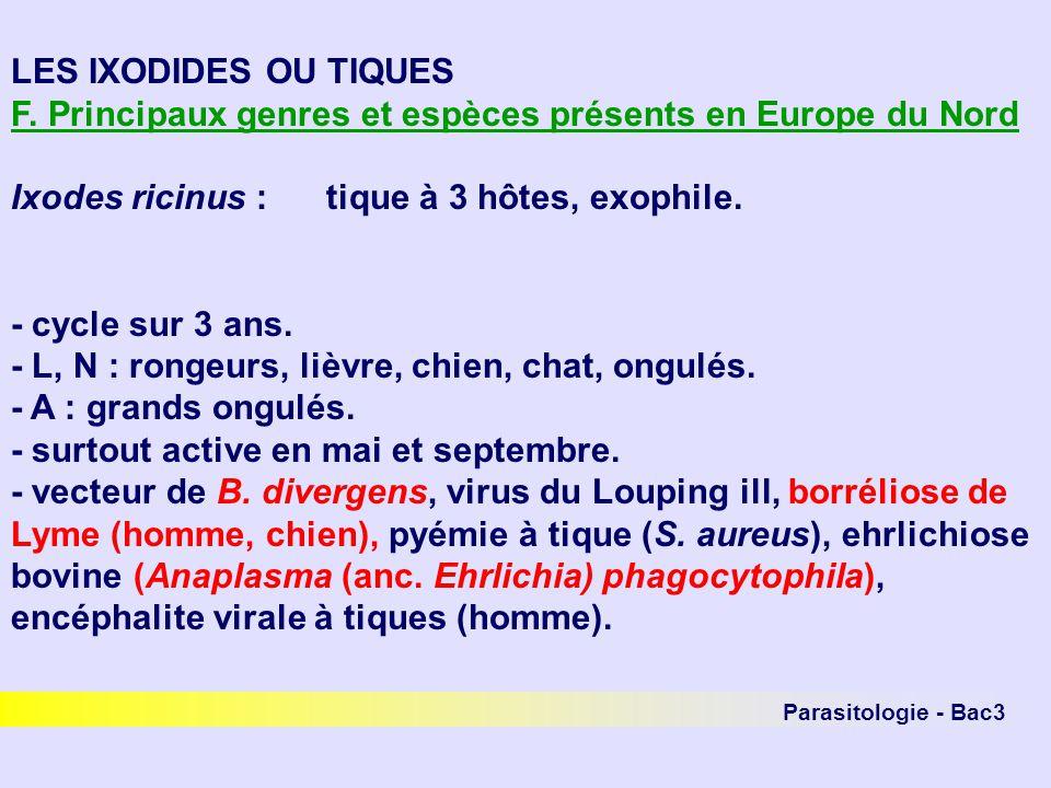 Parasitologie - Bac3 LES IXODIDES OU TIQUES F. Principaux genres et espèces présents en Europe du Nord Ixodes ricinus :tique à 3 hôtes, exophile. - cy