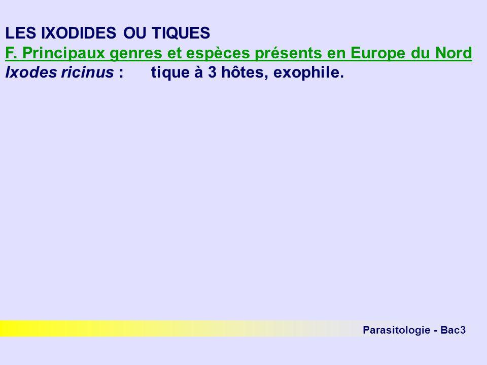 Parasitologie - Bac3 LES IXODIDES OU TIQUES F. Principaux genres et espèces présents en Europe du Nord Ixodes ricinus :tique à 3 hôtes, exophile.