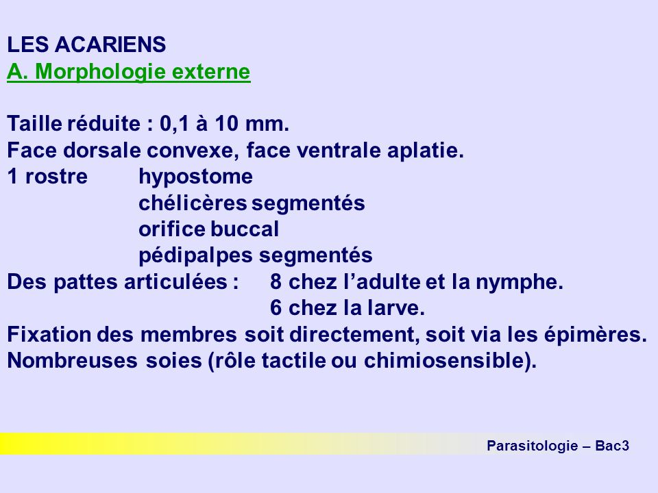 Parasitologie – Bac3 LES ACARIENS A. Morphologie externe Taille réduite : 0,1 à 10 mm. Face dorsale convexe, face ventrale aplatie. 1 rostrehypostome