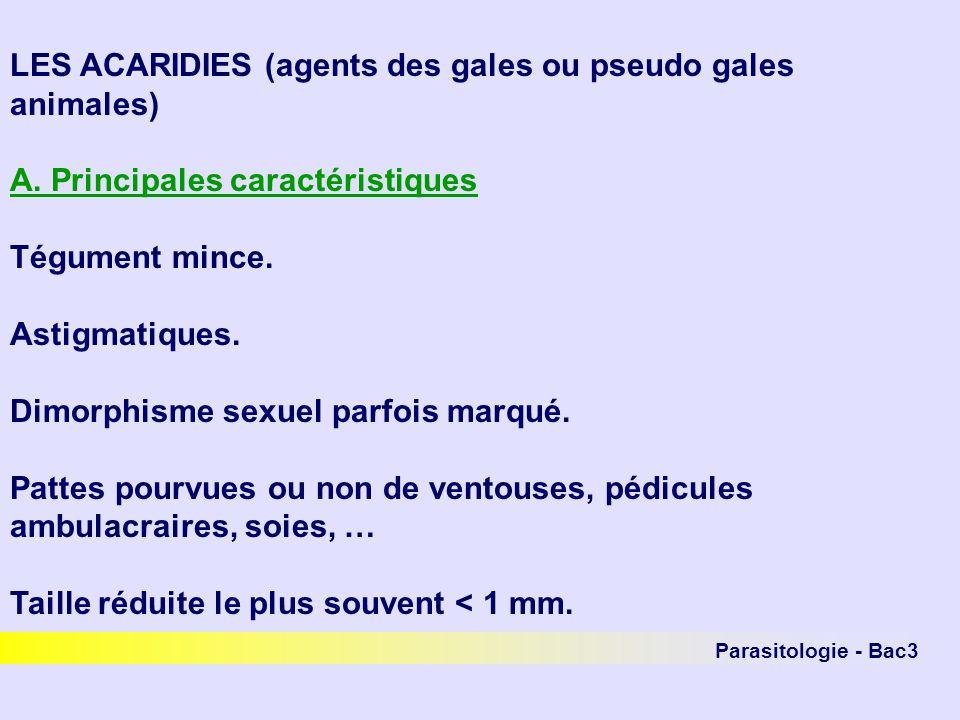 Parasitologie - Bac3 LES ACARIDIES (agents des gales ou pseudo gales animales) A. Principales caractéristiques Tégument mince. Astigmatiques. Dimorphi