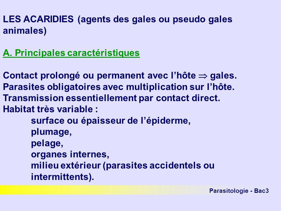 Parasitologie - Bac3 LES ACARIDIES (agents des gales ou pseudo gales animales) A. Principales caractéristiques Contact prolongé ou permanent avec lhôt