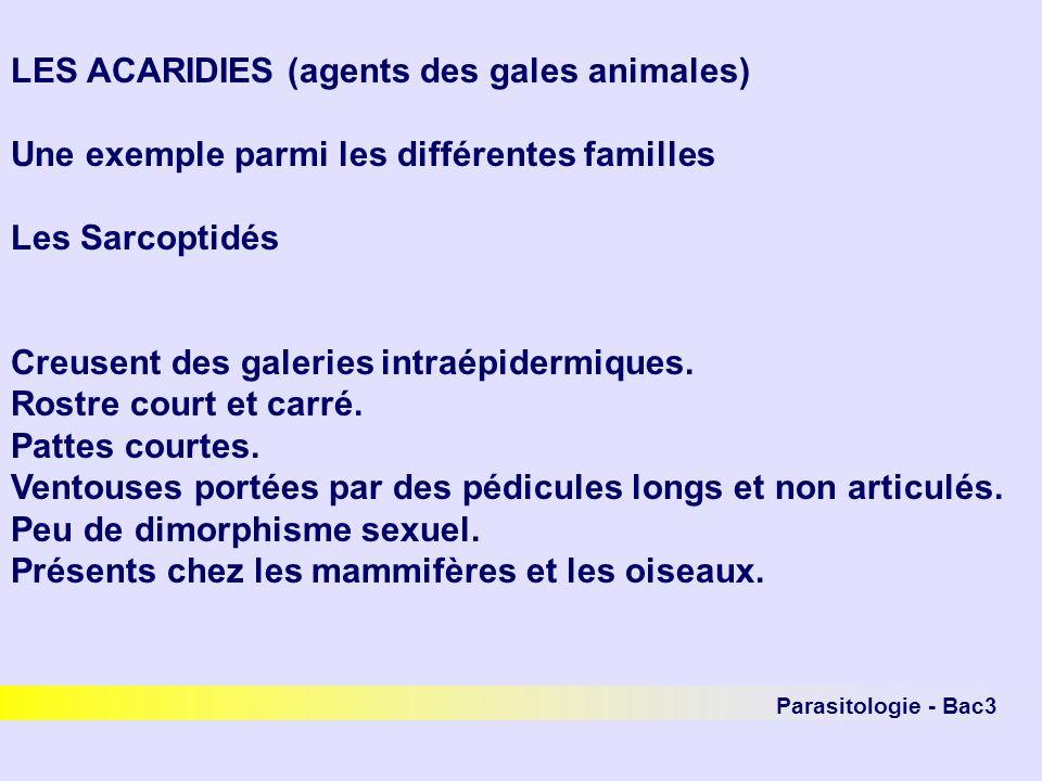 Parasitologie - Bac3 LES ACARIDIES (agents des gales animales) Une exemple parmi les différentes familles Les Sarcoptidés Creusent des galeries intraé