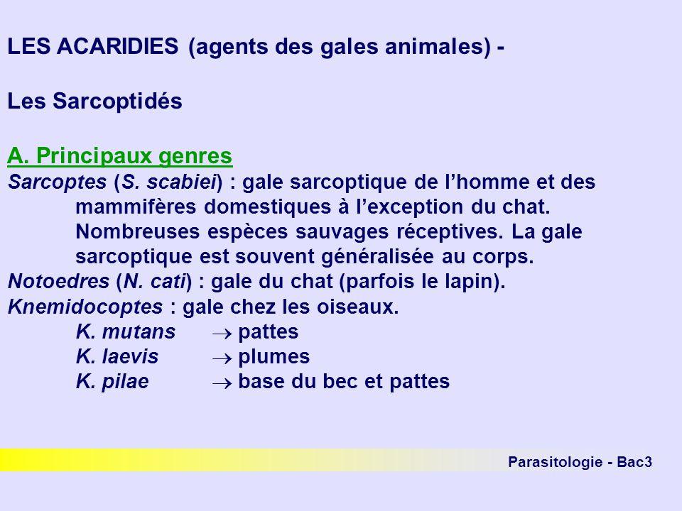 Parasitologie - Bac3 LES ACARIDIES (agents des gales animales) - Les Sarcoptidés A. Principaux genres Sarcoptes (S. scabiei) : gale sarcoptique de lho