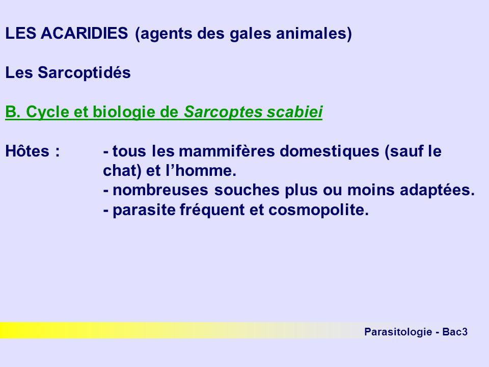 Parasitologie - Bac3 LES ACARIDIES (agents des gales animales) Les Sarcoptidés B. Cycle et biologie de Sarcoptes scabiei Hôtes :- tous les mammifères