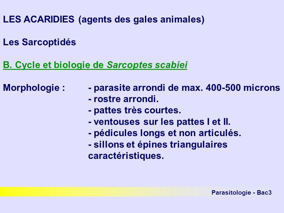 Parasitologie - Bac3 LES ACARIDIES (agents des gales animales) Les Sarcoptidés B. Cycle et biologie de Sarcoptes scabiei Morphologie :- parasite arron