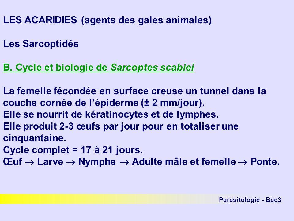 LES ACARIDIES (agents des gales animales) Les Sarcoptidés B. Cycle et biologie de Sarcoptes scabiei La femelle fécondée en surface creuse un tunnel da