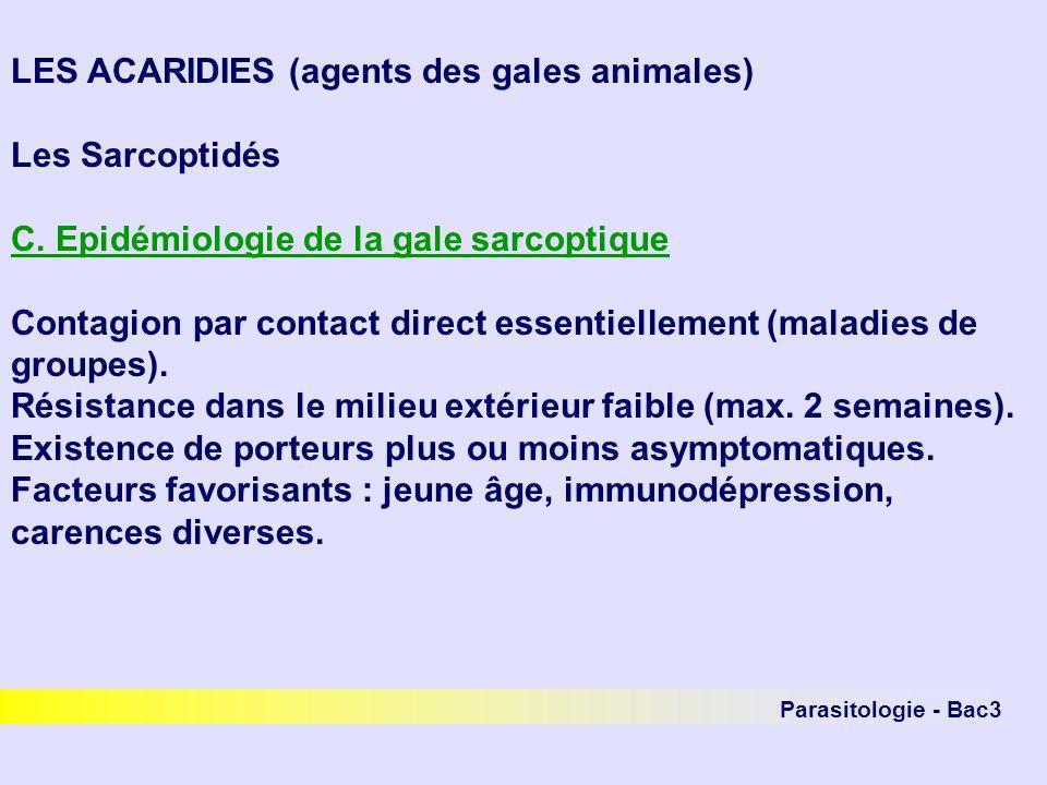 Parasitologie - Bac3 LES ACARIDIES (agents des gales animales) Les Sarcoptidés C. Epidémiologie de la gale sarcoptique Contagion par contact direct es