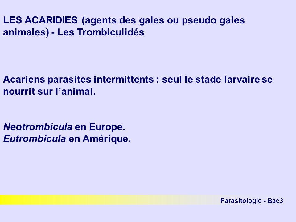 LES ACARIDIES (agents des gales ou pseudo gales animales) - Les Trombiculidés Acariens parasites intermittents : seul le stade larvaire se nourrit sur