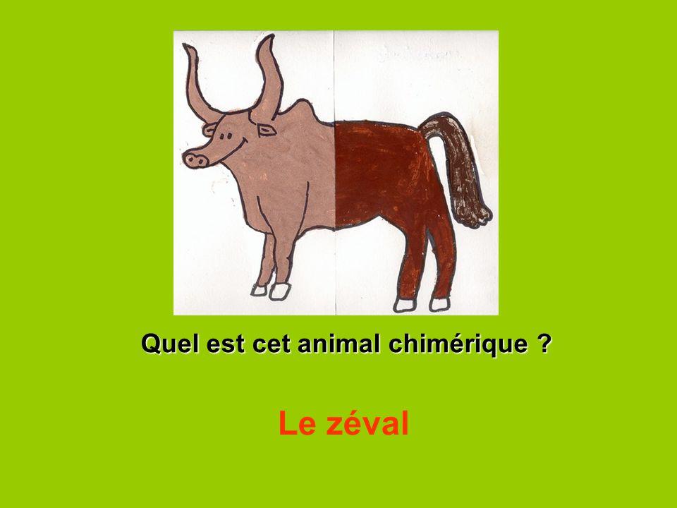 Quel est cet animal chimérique ? Le zéval