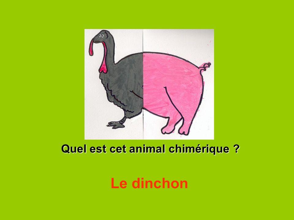 Quel est cet animal chimérique ? Le dinchon