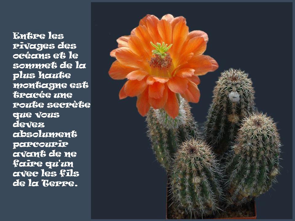 Discocactus horstii Les fleurs du printemps sont les rêves de l'hiver racontés, le matin, à la table des anges.
