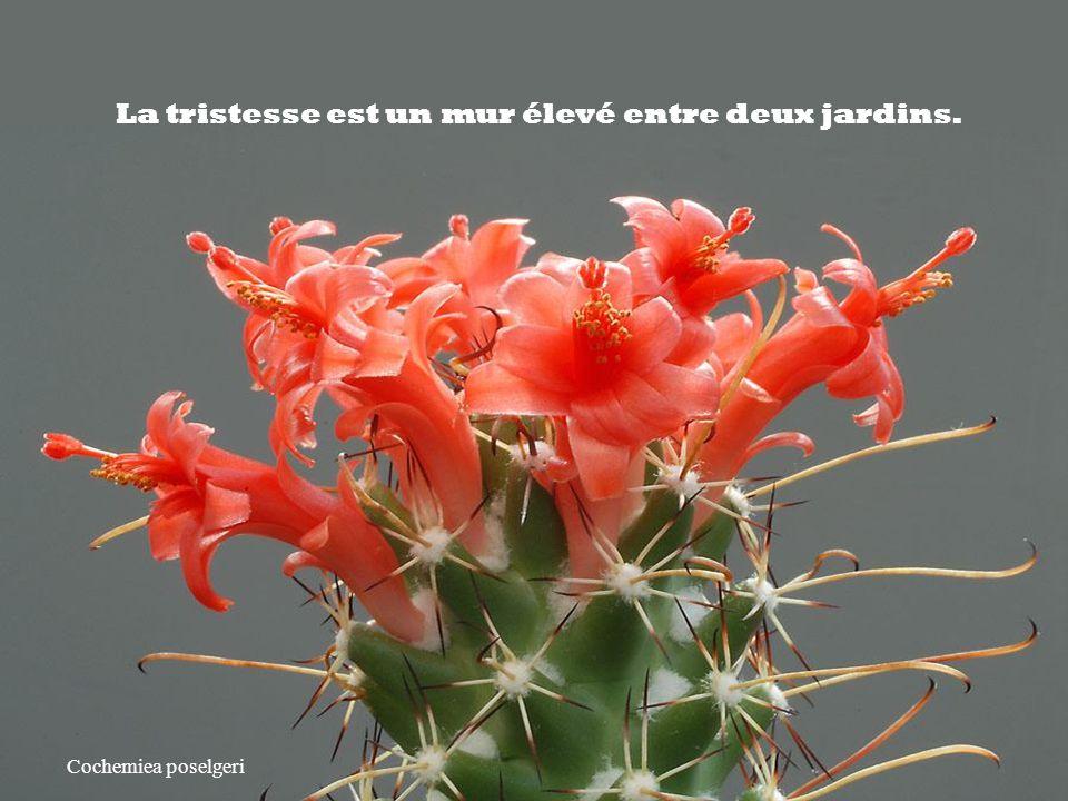 Astrophytum coahuilense Les cactus – Jacques Dutronc Citation de Gibran Khalil Gibran Ecrivain Libanais