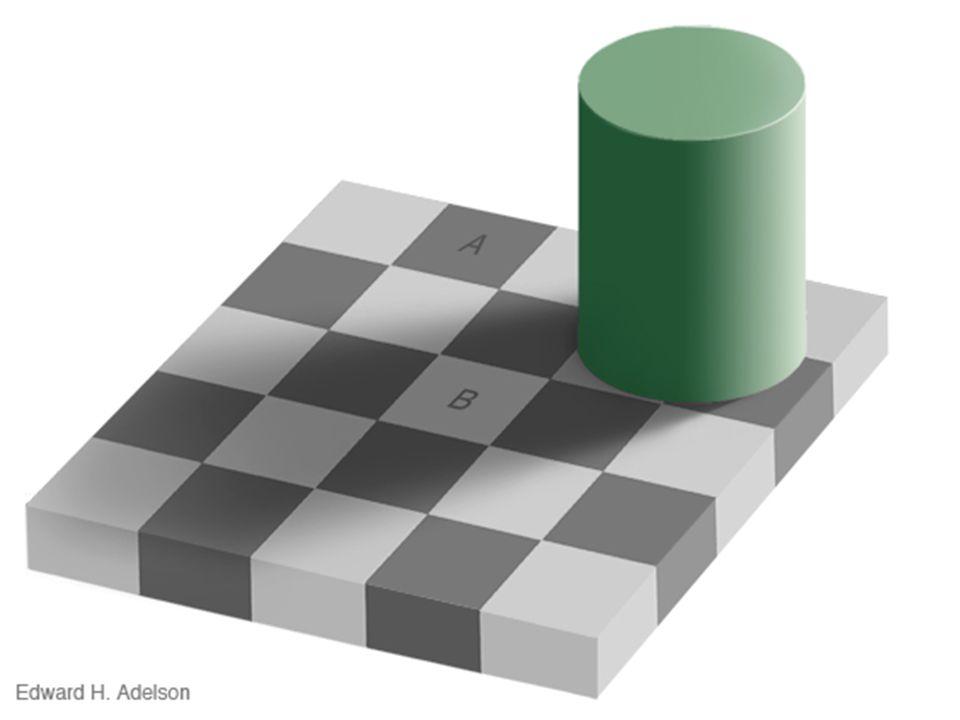 Ne te fâche pas, cest une chose importante : Cela nous donne une meilleure précision visuelle Ainsi nous pouvons percevoir beaucoup plus de détails dans notre environnement, plus de contrastes entre les couleurs.
