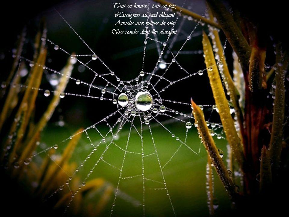 Tout est lumière, tout est joie, L araignée au pied diligent Attache aux tulipes de soie Ses rondes dentelles d argent.