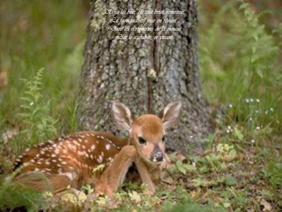 Sous les bois, où tout bruit s émousse, Le faon craintif joue en rêvant ; Dans les verts écrins de la mousse Luit le scarabée, or vivant.