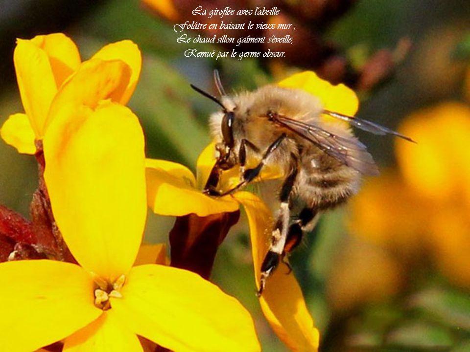 La giroflée avec l abeille Folâtre en baisant le vieux mur ; Le chaud sillon gaîment s éveille, Remué par le germe obscur.