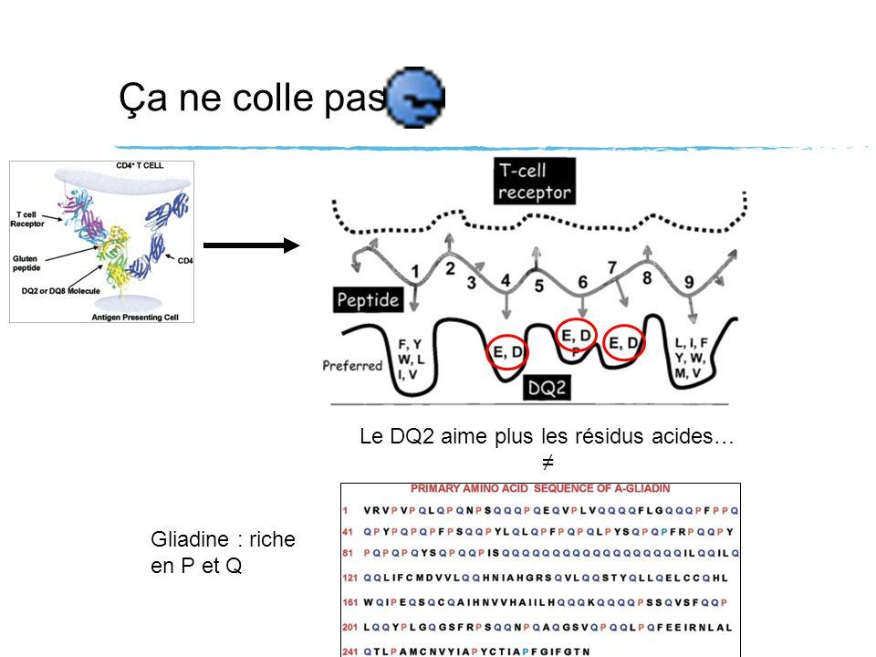 Ça ne colle pas Le DQ2 aime plus les résidus acides… Gliadine : riche en P et Q