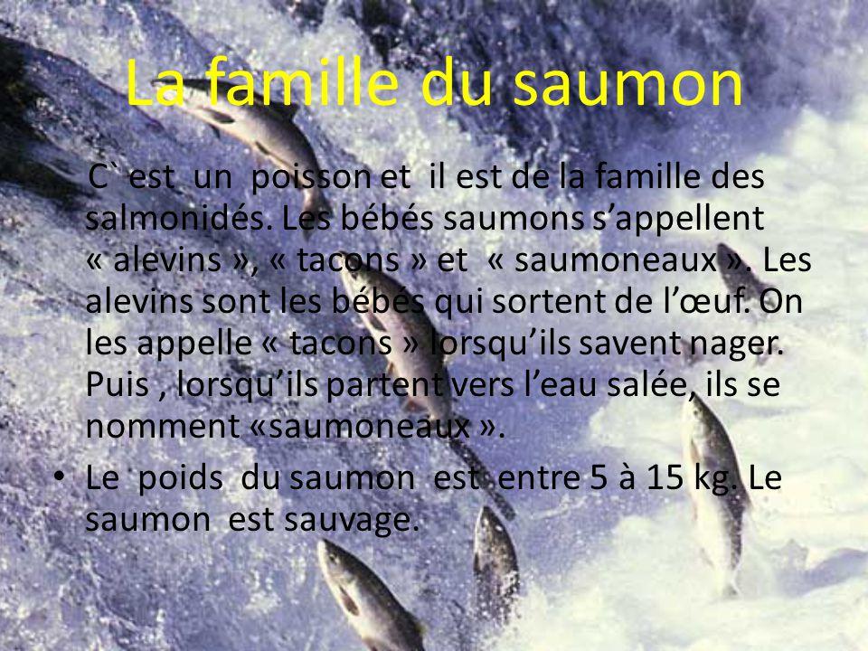 La famille du saumon C` est un poisson et il est de la famille des salmonidés.
