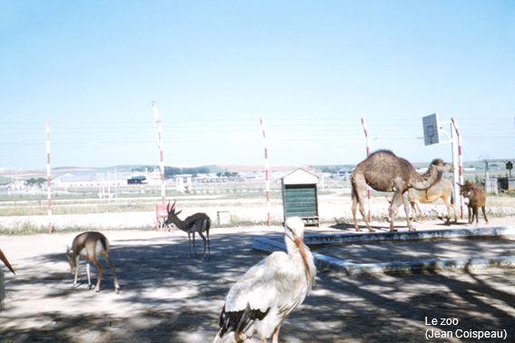 Le zoo (Jean Coispeau)
