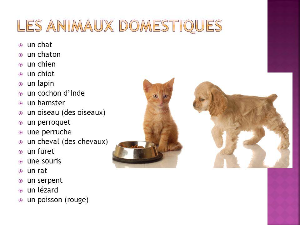 un chat un chaton un chien un chiot un lapin un cochon dInde un hamster un oiseau (des oiseaux) un perroquet une perruche un cheval (des chevaux) un f