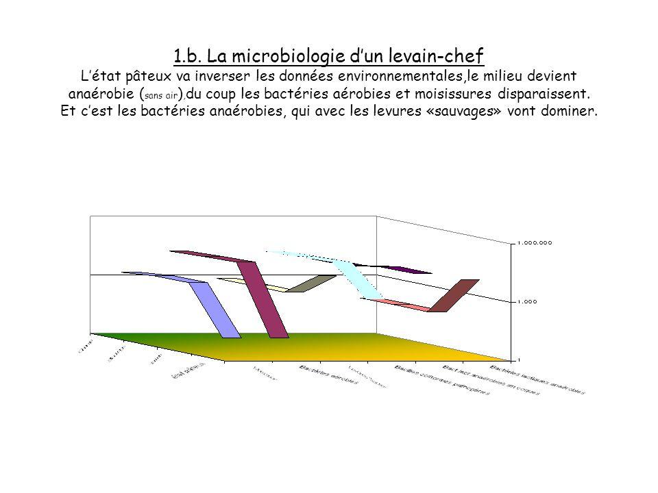 1.a. La microbiologie dun levain-chef Les ferments sont la base, le capital, le potentiel principal du levain-chef. Regardons pour comprendre lévoluti