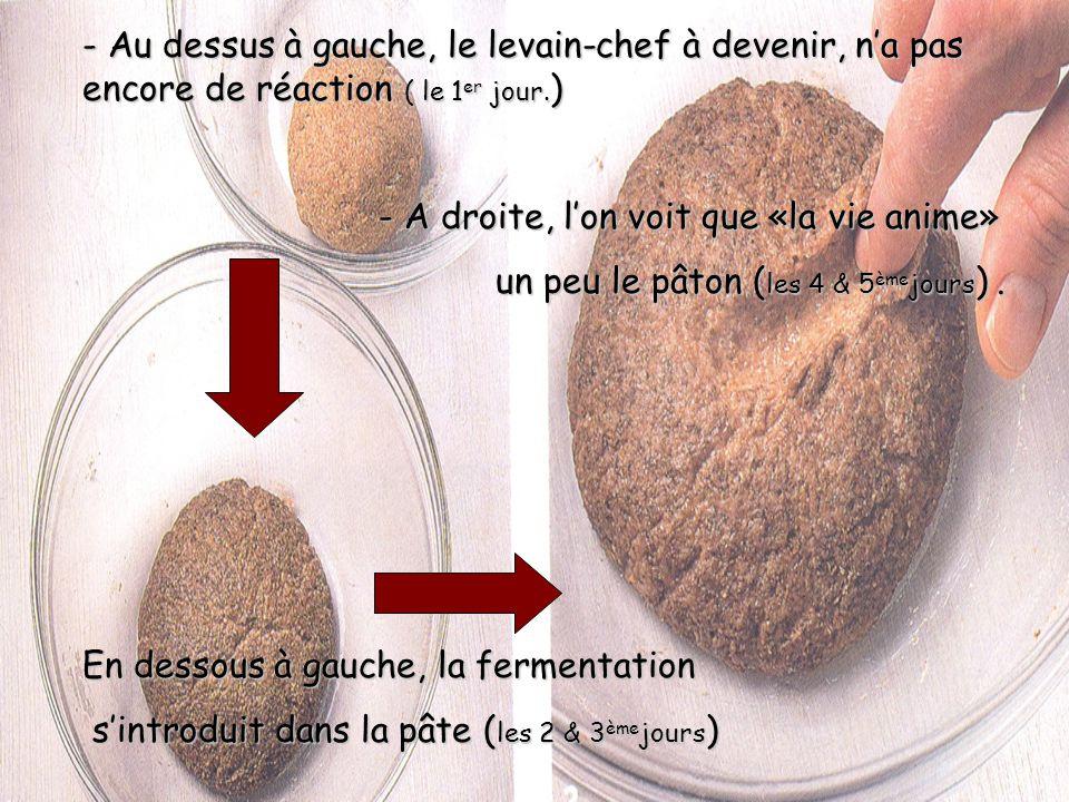 2.i. La confection dun levain-chef Après 5 jours, si tout va bien, vous disposez dun levain-chef. Léchec se remarque simplement par manque de gonfleme