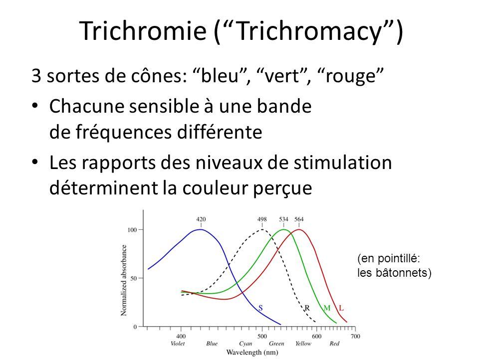 Trichromie (Trichromacy) 3 sortes de cônes: bleu, vert, rouge Chacune sensible à une bande de fréquences différente Les rapports des niveaux de stimul