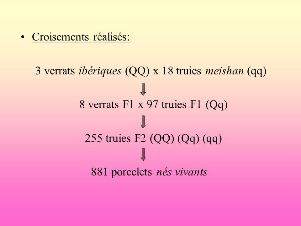 Croisements réalisés: 3 verrats ibériques (QQ) x 18 truies meishan (qq) 8 verrats F1 x 97 truies F1 (Qq) 255 truies F2 (QQ) (Qq) (qq) 881 porcelets né