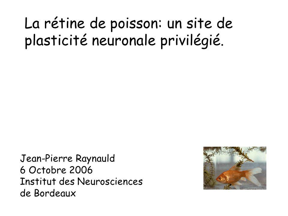 La rétine de poisson: un site de plasticité neuronale privilégié. Jean-Pierre Raynauld 6 Octobre 2006 Institut des Neurosciences de Bordeaux