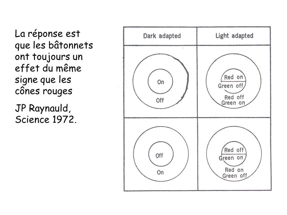La réponse est que les bâtonnets ont toujours un effet du même signe que les cônes rouges JP Raynauld, Science 1972.