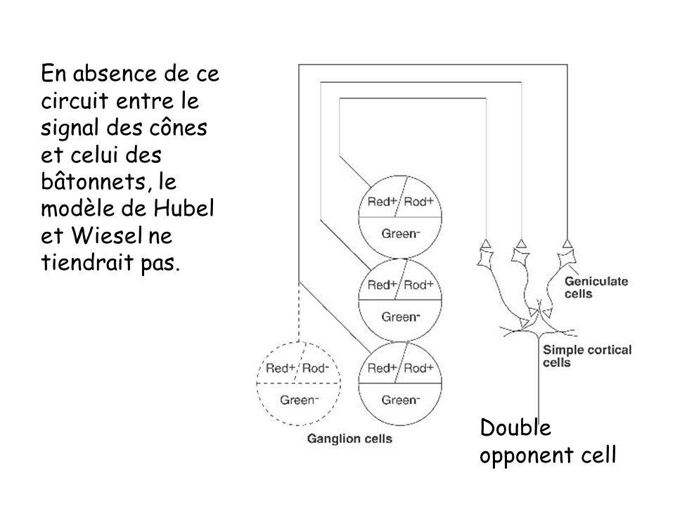 En absence de ce circuit entre le signal des cônes et celui des bâtonnets, le modèle de Hubel et Wiesel ne tiendrait pas. Double opponent cell