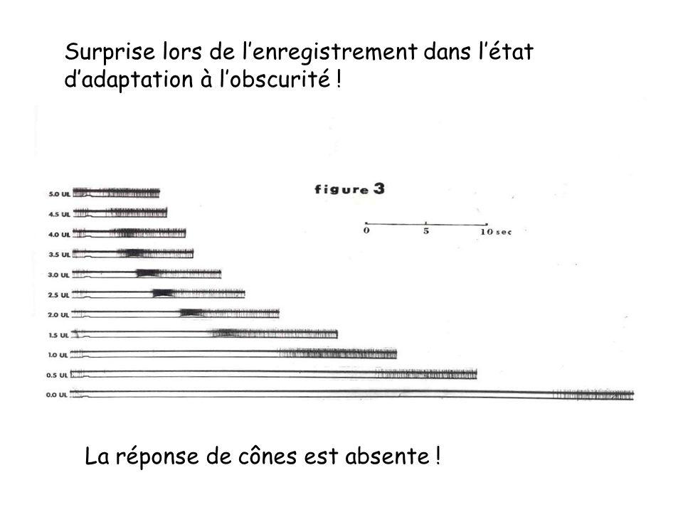 Surprise lors de lenregistrement dans létat dadaptation à lobscurité ! La réponse de cônes est absente !