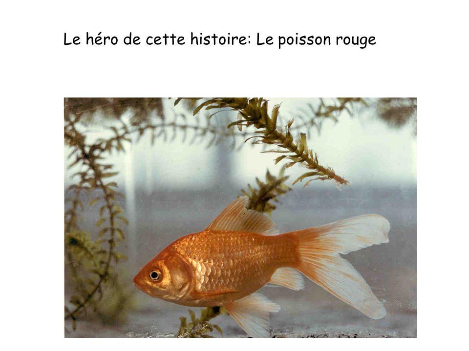 Le héro de cette histoire: Le poisson rouge