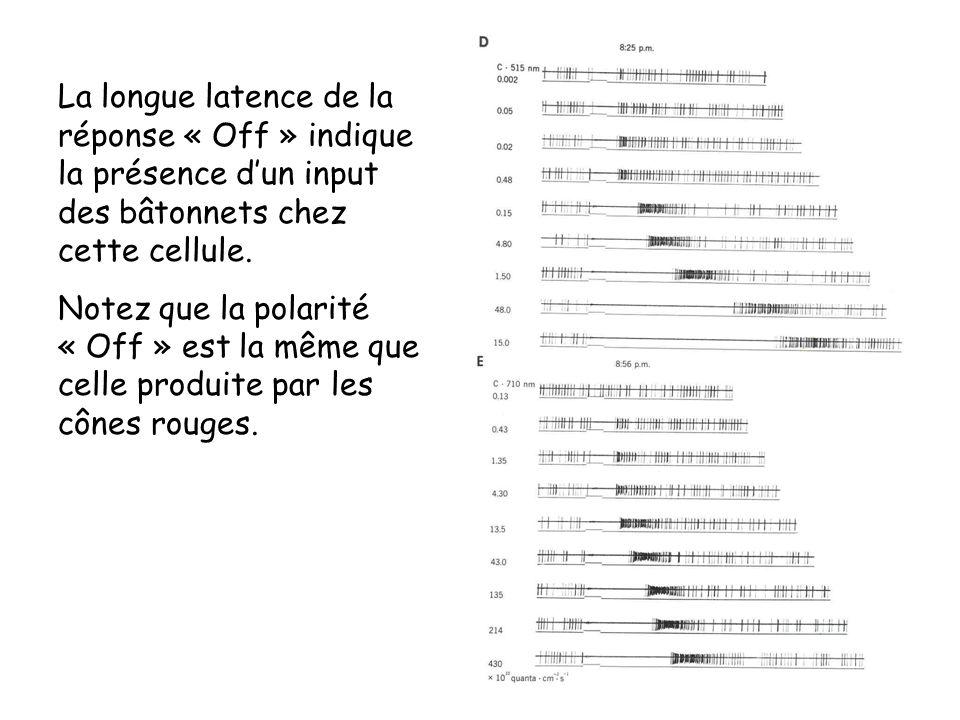 La longue latence de la réponse « Off » indique la présence dun input des bâtonnets chez cette cellule. Notez que la polarité « Off » est la même que