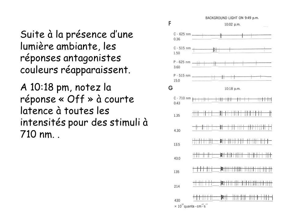 Suite à la présence dune lumière ambiante, les réponses antagonistes couleurs réapparaissent. A 10:18 pm, notez la réponse « Off » à courte latence à