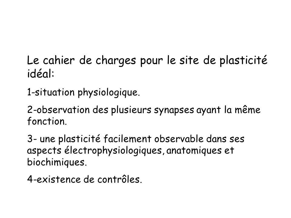 Le cahier de charges pour le site de plasticité idéal: 1-situation physiologique. 2-observation des plusieurs synapses ayant la même fonction. 3- une