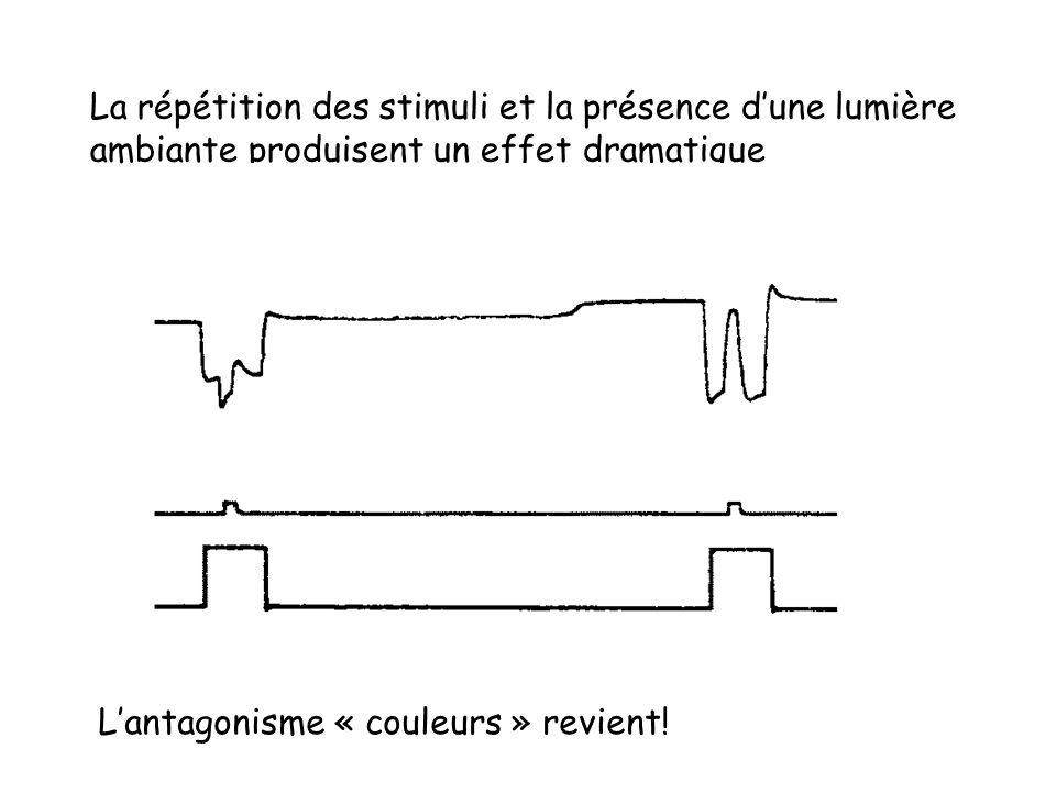 La répétition des stimuli et la présence dune lumière ambiante produisent un effet dramatique Lantagonisme « couleurs » revient!