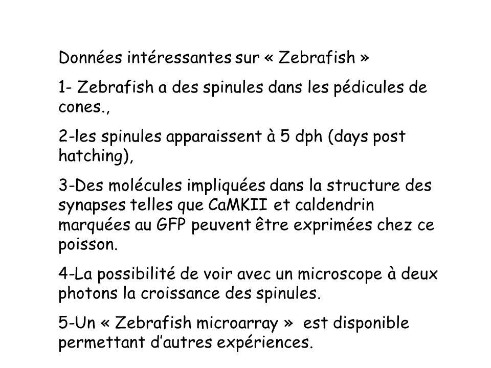 Données intéressantes sur « Zebrafish » 1- Zebrafish a des spinules dans les pédicules de cones., 2-les spinules apparaissent à 5 dph (days post hatch