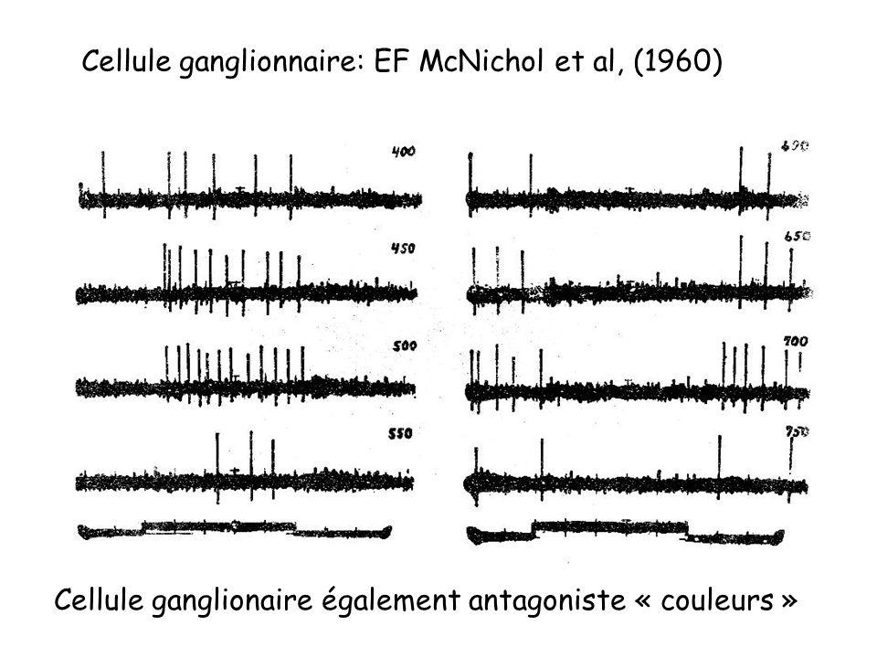 Cellule ganglionnaire: EF McNichol et al, (1960) Cellule ganglionaire également antagoniste « couleurs »